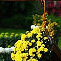 2011士林官邸菊展-菊與詩的對話