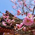20160315日本.北九州.Day3 (太宰府)