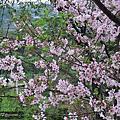 三芝的花景