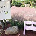 濟州景點.西歸浦市 | 秋日限定,浪漫爆表,少女心噴發的粉紅亂子草咖啡店 Manor Blanc 마노르블랑
