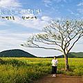 濟州景點.濟州市|山野散策,曉星岳極美日落與孤獨的樹 새별오름 . 왕따나무
