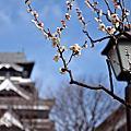 春遊九州 Day 4 熊本。阿蘇