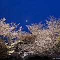 2012 九州賞櫻