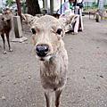2015.04.05~04.06 日本關西自由行
