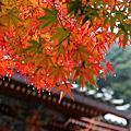201011 京都。紅葉 。南禪寺。永觀堂