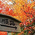 201011 京都。紅葉 。竹林之道。野宮神社。金閣寺。
