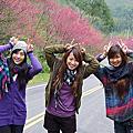 20110213 東眼山賞山櫻花