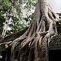201105 與娘同遊Angkor
