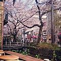 【被櫻花包圍的用餐!花見高瀨川3家必去店】