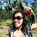 採櫻桃的季節~Okanagan