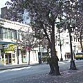 200805西雅圖36小時