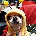 小蜜蜂黃mymy