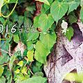 2016桌曆