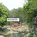 99/3/21青草湖&南庄蓬來溪護魚步道