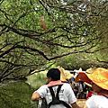 【飛與行的記憶】國內行的∣台南:四草綠色隧道