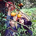 【飛與行的記憶】國內行的∣台北:初五收心操,上山採柑橘