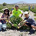 【飛與行的記憶】國外∣希臘:聖托里尼島上的原生葡萄園