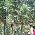 2008.7.22 薰衣草森林