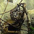 20100102台北木柵動物園
