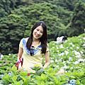 104年-(春)陽明山賞繡球花