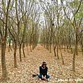 林後四林平地森林園區