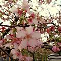 20130216*芬園花卉生產休憩園區