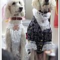 2010台北寵物用品展