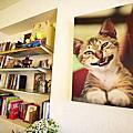 20110206貓雜貨咖啡館