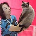 2010十三屆CFA貓展