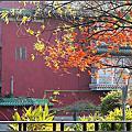 植物園冬景