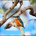 植物園賞鳥