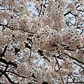 2013-04-17 韓國八日遊