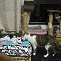 黑貓白貓都是好貓