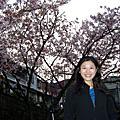 200803 天元宮櫻花樂