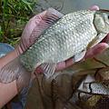 釣魚日記(1021011-中安)