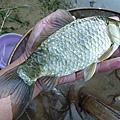 釣魚日記(10211130-基隆河)