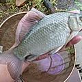 釣魚日記(1021223-北投水溝)