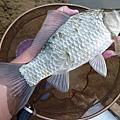 釣魚日記(1030105-基隆河)