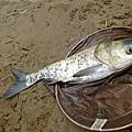 釣魚日記(1030119-深坑)