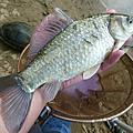 釣魚日記(1030125-基隆河)