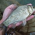 釣魚日記(1030129-基隆河)