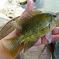 釣魚日記(1030203-基隆河)