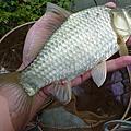 釣魚日記(1030215-淡水野塘)