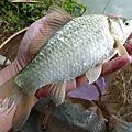 釣魚日記(1030222-淡水野塘)