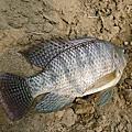 釣魚日記(1030404-基隆河)