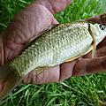 釣魚日記(1031004-青潭)