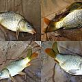 釣魚日記(1040102-基隆河)
