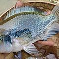 釣魚日記(1040125-基隆河)