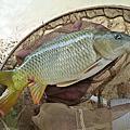 釣魚日記(1040215-基隆河)