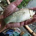 釣魚日記(1040217-青潭)